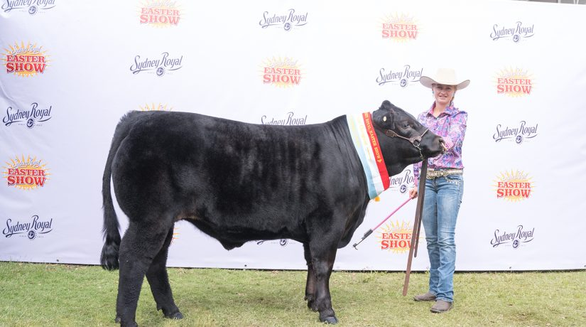 Grand champion steer Sydney Royal 2019